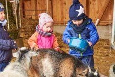 Tiergestützte Pädagogik Wir kaufen einen Bauernhof … oder einfach tiergestützte Pädagogik